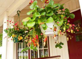 12 loại rau củ dễ trồng ngay trong nhà, vừa đẹp vừa tiện cho người nội trợ